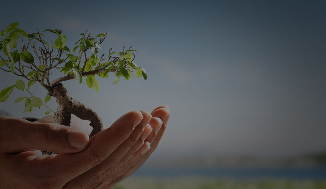 photo of a person holding a small tree to depict sustainability practices in our business